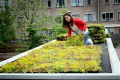 Planten op plat dak