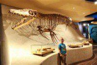 maastricht natuurhistorisch museum mosasaurus