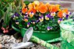 februari bloemen buiten 200x133