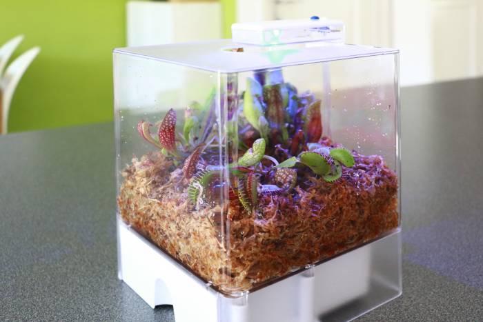 terrarium-met-vleesetende-planten