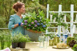 Kleurenspel op balkon of terras met een hortensia in een pot