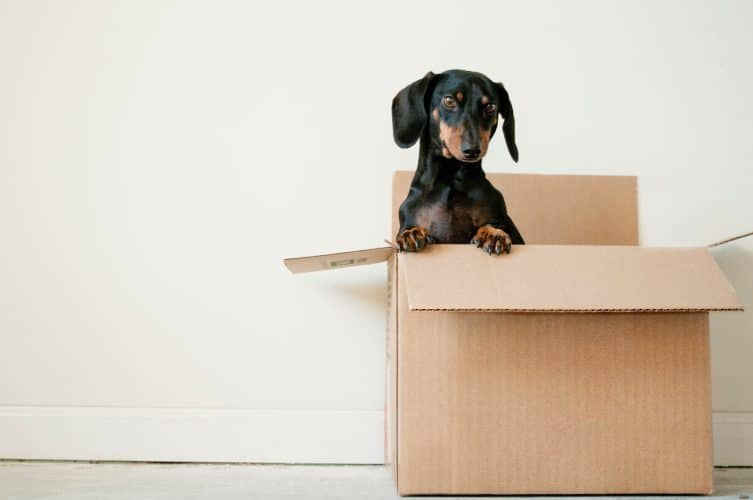 huisdier hond doos