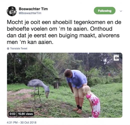 shoebill