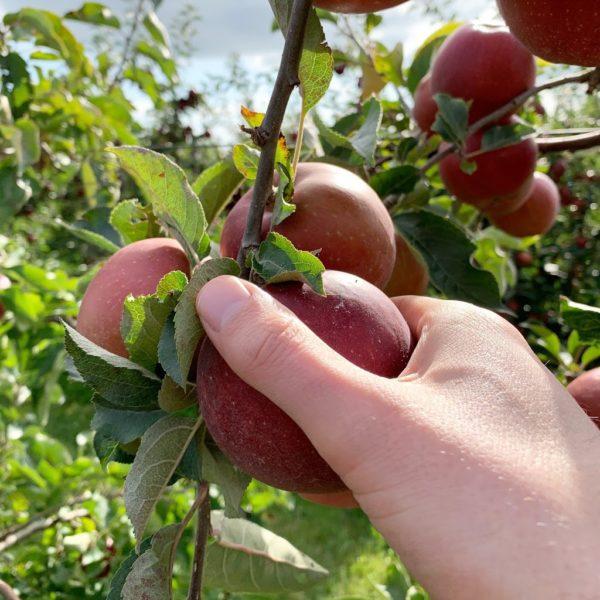 fruitboerderij vink plukken