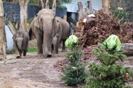 Kerstboom olifanten 3
