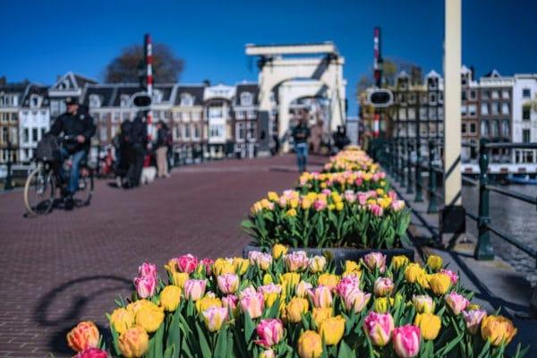 Tulp festival amsterdam 2