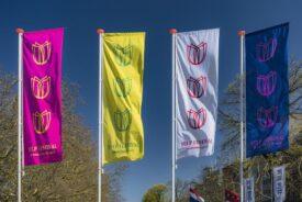 Tulp festival amsterdam 3