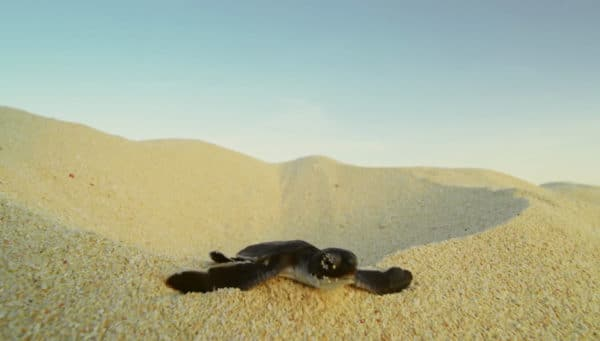 Turtle Adventure baby Bunji