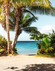 staycation vakantie thuis thema hawaii - palmbomen 1