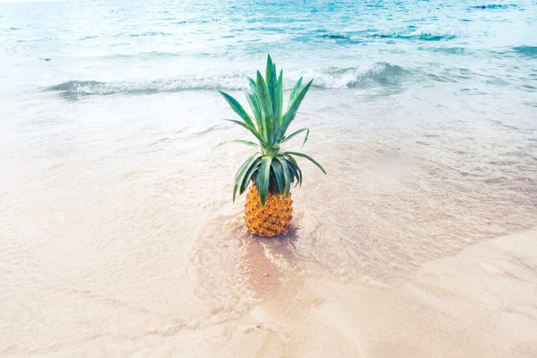 staycation vakantie thuis thema hawaii - zee ananas