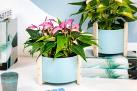 anthurium plant werkplek