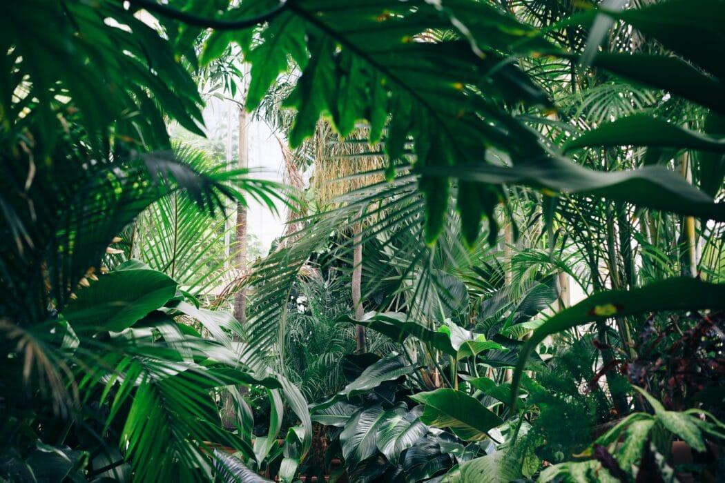 planten binnenplanten