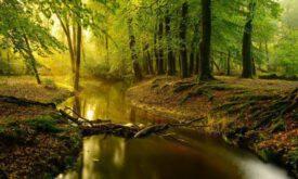 Gelderland Leuvenumse bossen