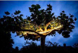 innr outdoor flex light in boom